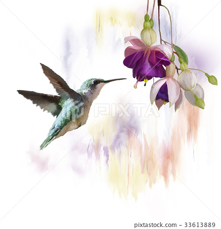 Hummingbird and flowers watercolor 33613889