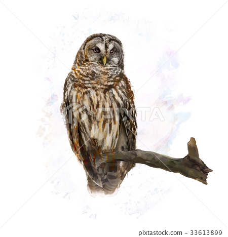 Barred Owl perching watercolor 33613899