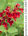 植物 植物学 植物的 33614667