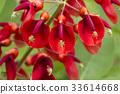 植物 植物学 植物的 33614668