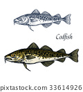 Cod fish vector isolated sketch icon 33614926