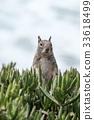 松鼠 野生 動物 33618499