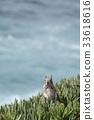 松鼠 野生 野生動物 33618616