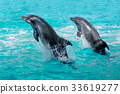 dolphin, water, jump 33619277