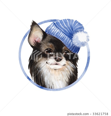 Cute dog in blue hat 33621758