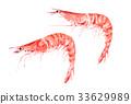 水彩 水彩画 虾 33629989