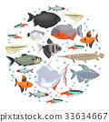 Freshwater aquarium fishes characin icon set  33634667