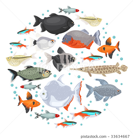 Freshwater aquarium fishes characin icon set  33634667