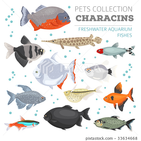 Freshwater aquarium fishes characin icon set  33634668