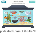 fish, aquarium, vector 33634670