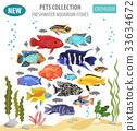Freshwater aquarium fishes cichlid icon set  33634672