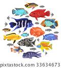 Freshwater aquarium fishes cichlid icon set  33634673