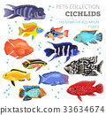 Freshwater aquarium fishes cichlid icon set  33634674