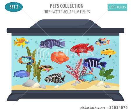 Freshwater aquarium fishes cichlid icon set  33634676