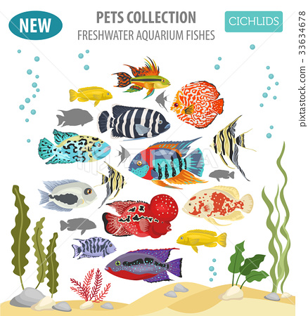 Freshwater aquarium fishes cichlid icon set  33634678