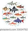 Freshwater aquarium cyprinid fish icon set  33634702