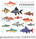 Freshwater aquarium cyprinid fish icon set  33634703
