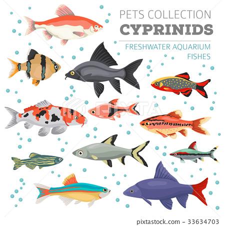 Freshwater aquarium cyprinid fish icon set  33634703