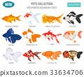 fish, goldfish, vector 33634706