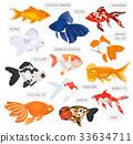 fish, goldfish, vector 33634711