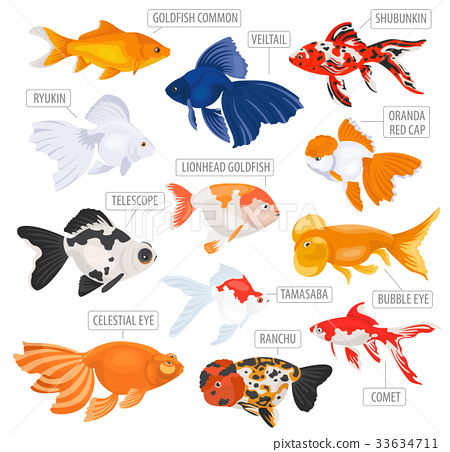 Freshwater aquarium gold fish icon set  33634711