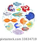 Freshwater aquarium labyrinth fish icon set  33634719