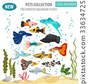 Freshwater aquarium livebearers fish icon set  33634725