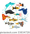 Freshwater aquarium livebearers fish icon set  33634726