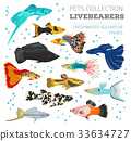 Freshwater aquarium livebearers fish icon set  33634727