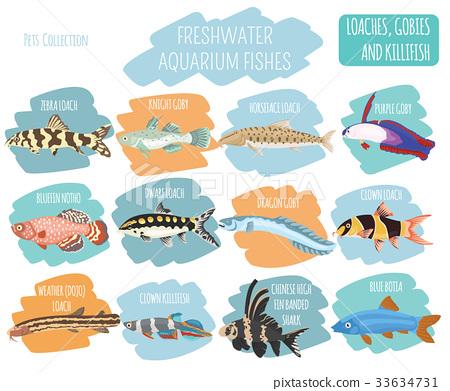 Freshwater aquarium fish loach, goby, killifish 33634731