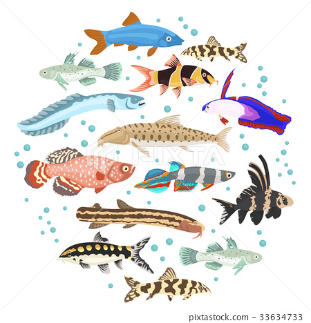 Freshwater aquarium fish loach, goby, killifish 33634733