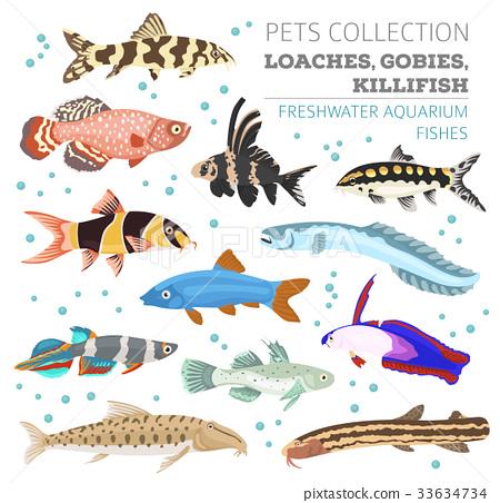 Freshwater aquarium fish loach, goby, killifish 33634734