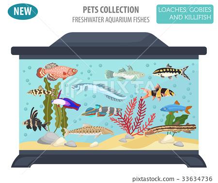 Freshwater aquarium fish loach, goby, killifish 33634736