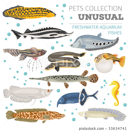 Freshwater aquarium unusual fish icon set 33634741