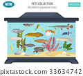 fish, aquarium, vector 33634742