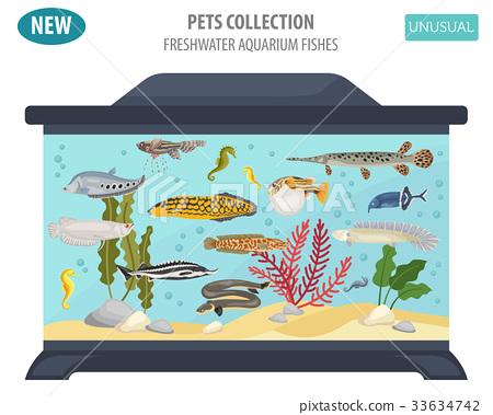 Freshwater aquarium unusual fish icon set 33634742