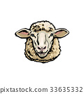 Front view sketch portrait of domestic farm sheep 33635332