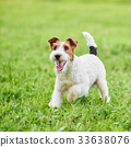 lawn dog dogs 33638076