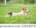 lawn dog dogs 33638078