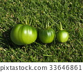 tomato, three object, green tomato 33646861