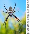蜘蛛 萬聖節 十月 33646862