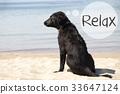 Dog At Sandy Beach, Text Relax 33647124