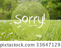 Gras Meadow, Daisy Flowers, Text Sorry 33647129
