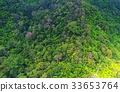 aerial, view, forest 33653764