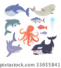 Whale, Shark, Octopus, Seals, Jellyfish, Salmon 33655841