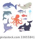 Whale, Shark, Octopus, Seals, Jellyfish, Salmon 33655841