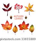 가을, 단풍, 잎 33655889