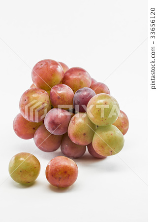 Grape Gorby 33656120