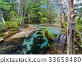 pond, lagoon, forest 33658480