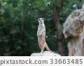 動物 哺乳動物 挖洞 33663485